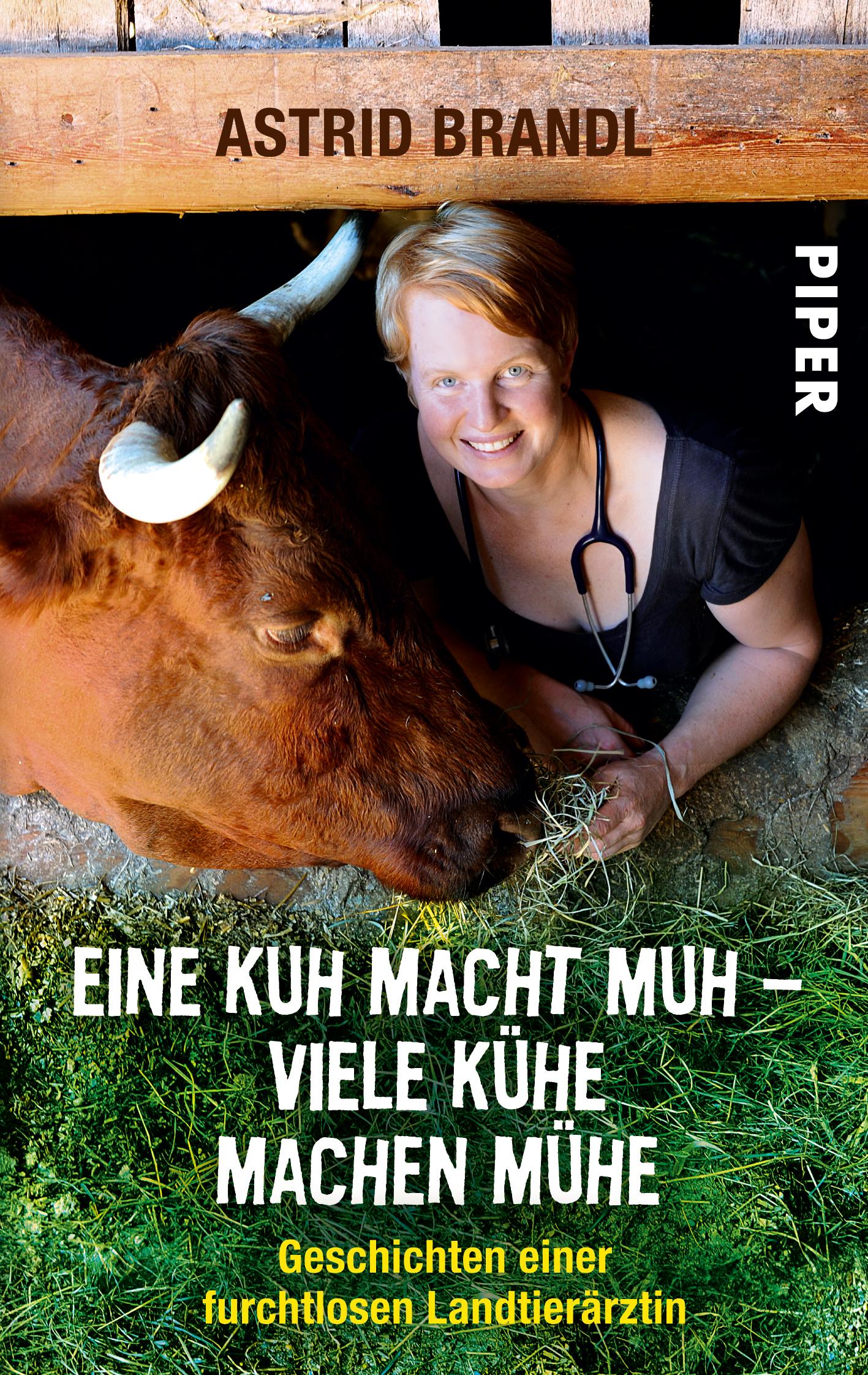 Stall kuh redewendung im lassen Diskussion:Deutsche Sprichwörter